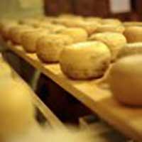 crosta-oro